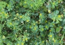 Зеленые удобрения-сидераты