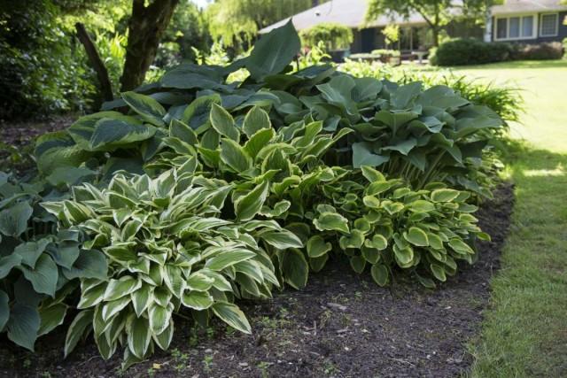 Растения в тени
