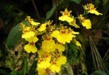 Коллекция прекрасных орхидей