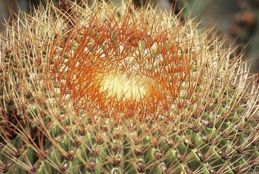 Грунт для кактусов - Комнатные