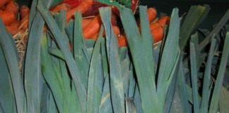 Лук-порей (Allium porrum)