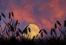 Лунный календарь. Июнь 2010