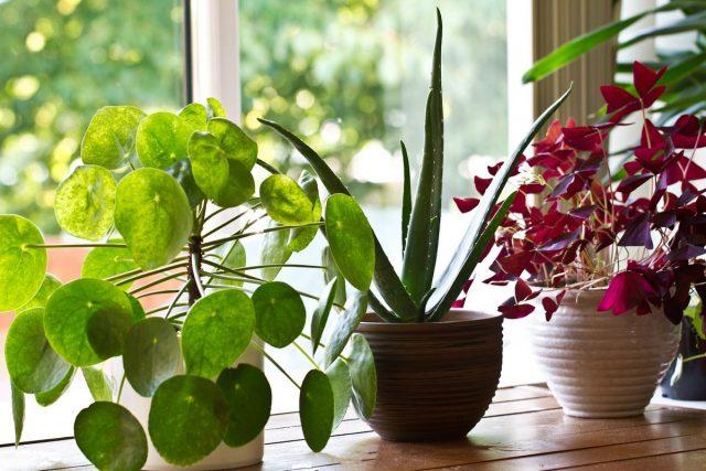 Растения и здоровье