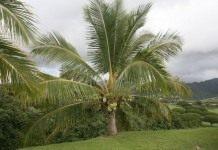 Уход за пальмами