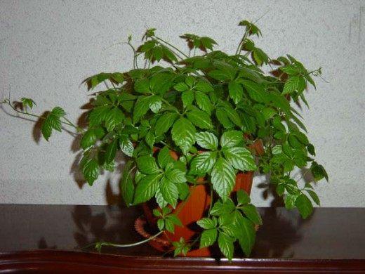 болезней комнатных растений и лечение в домашних условиях
