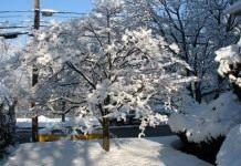 Где зимуют вредители сада