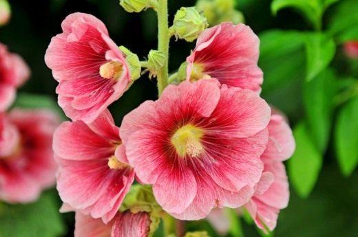 цветок плод фото