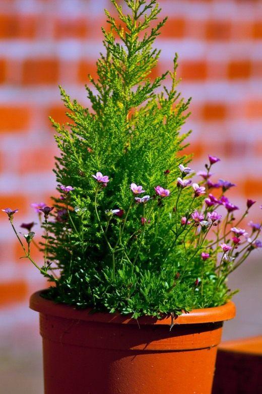 комнатные садовые растения удобрение подкормка виды свойства фото минеральное