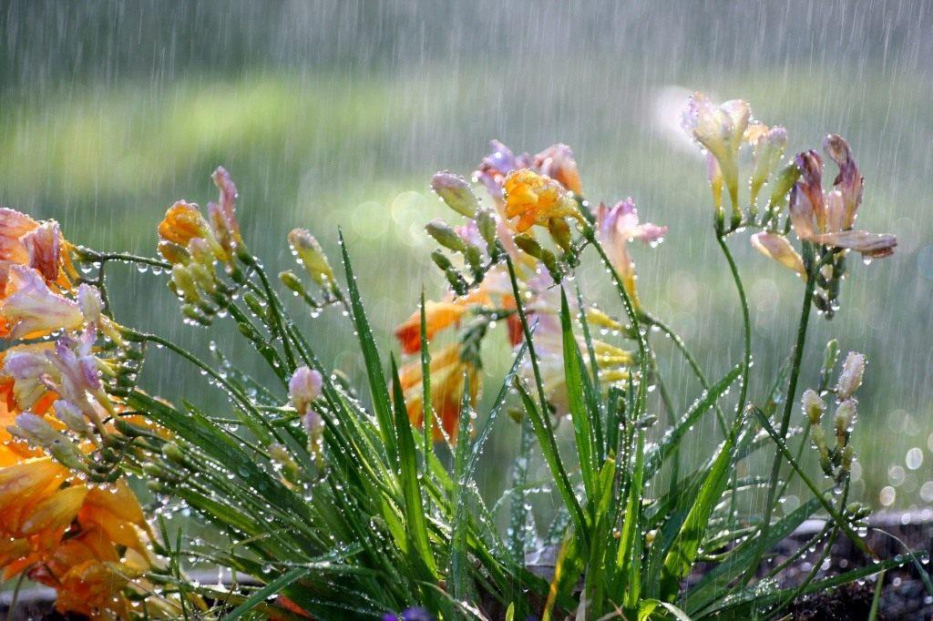 Sabah səhər yağış yağacaq - PROQNOZ