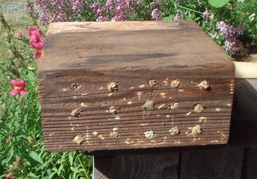 Заполненный домик-блок для пчёл Осмии (House for Mason bee)