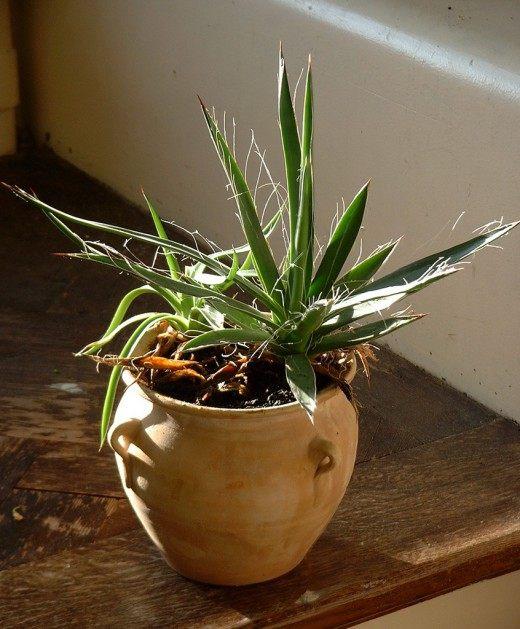удобрение с магнием для комнатных растений