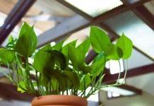 Световой режим для комнатных растений