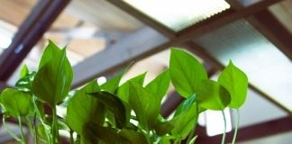 Естественная подсветка растений