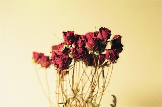 Живые цветы способ засушивания доставка цветов ромашки