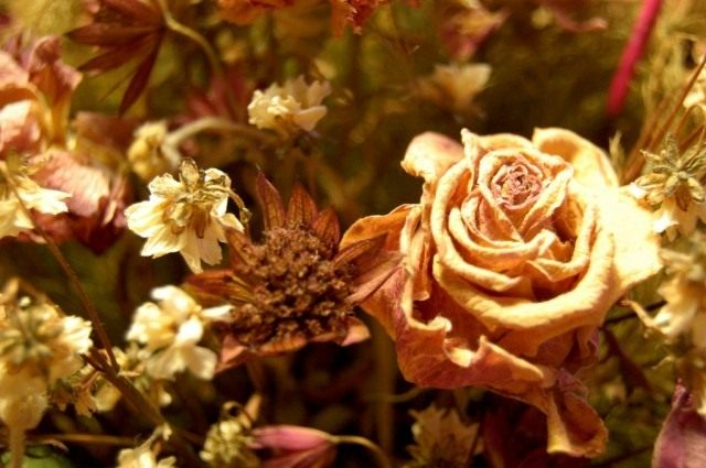 Высушенные цветы