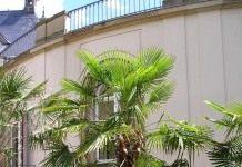 Жизнь под пальмами