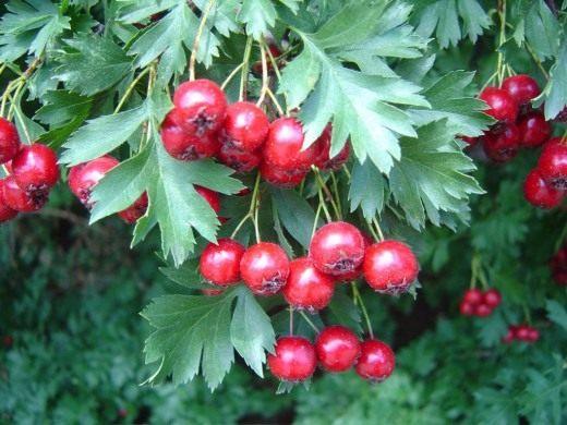 Эротические рассказы про растений фото 229-268