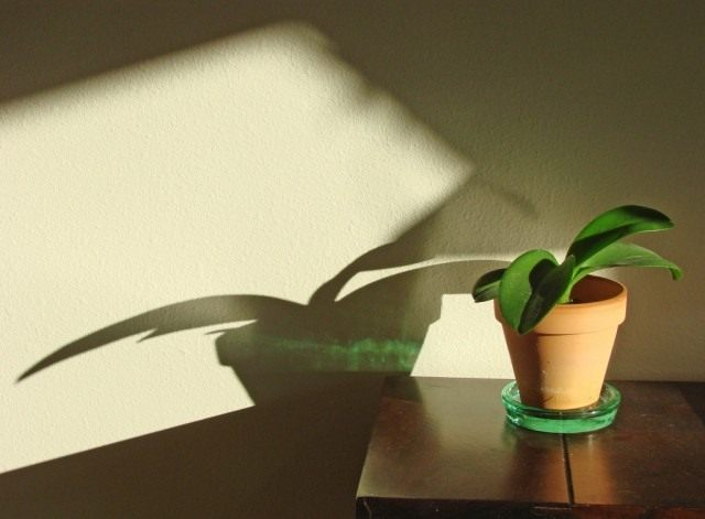 Период покоя у комнатных растений