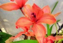 Болезни и вредители орхидеи. Способы борьбы с ними