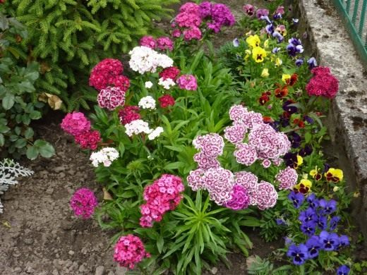 садовые цветы из семян фото и названия