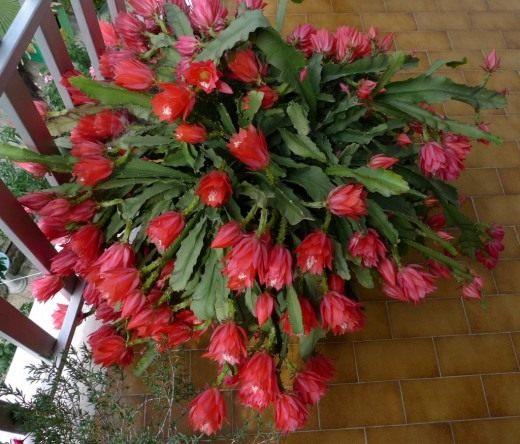 Уход за кактусами