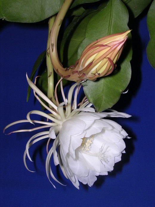все виды кактусов и с фото название и уход за ними
