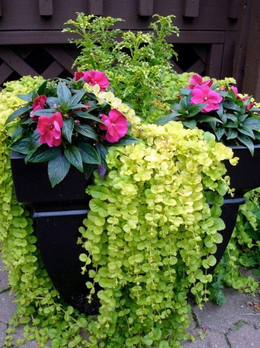 Цветы в контейнере