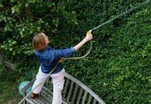 Полив молодых и плодоносящих деревьев