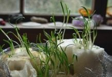 Первые весенние хлопоты садоводов