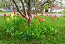 Под сенью сада