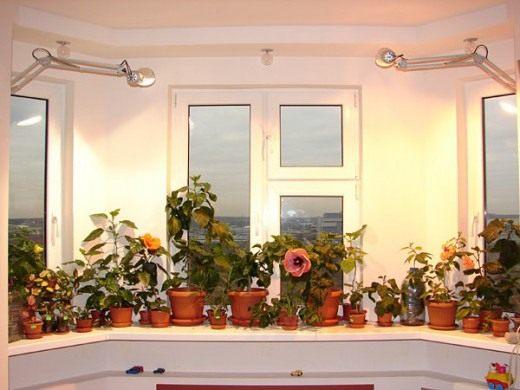 Дополнительная подсветка растений