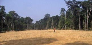 Вырубка леса в Африке