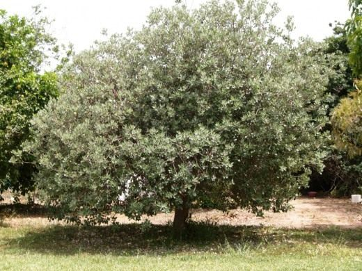 Фруктовый салат чунга чанга фото фруктового дерева