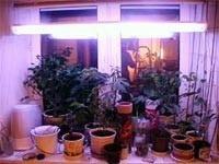 Освещение растений. Часть 2: Лампы для освещения растений