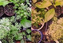 Освещение растений. Часть 3: Выбор системы освещения