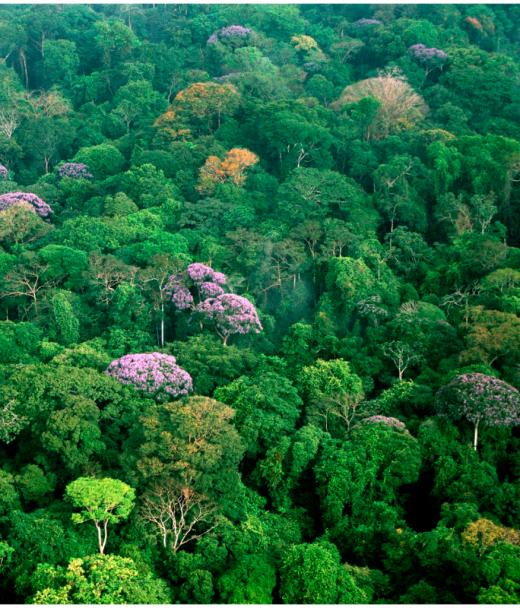 Сельва - влажный тропический лес