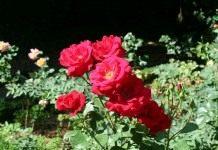 Из вазы – в сад
