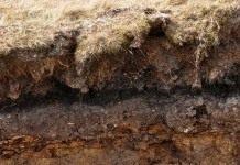 Особенности почвы, которые нужно учитывать в земледелии