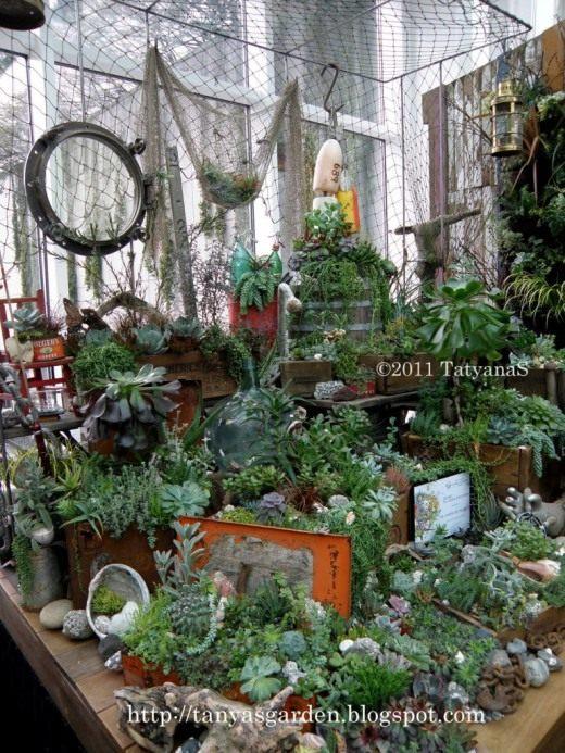 Суккуленты succulents