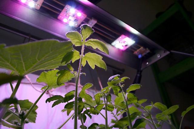 Свет для растений Light-2-02-640x427