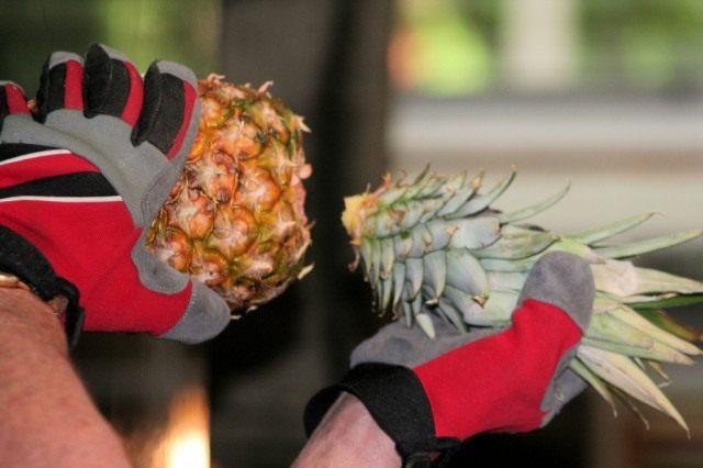 Обрезка ананаса для выращивания дома