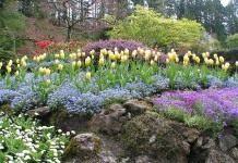 Цветник: размещение растений в цветнике, часть-1