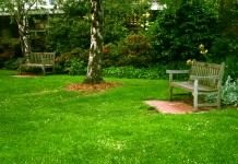 Что такое газонные сорняки и как с ними бороться