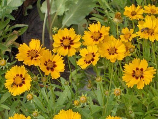 Солнышко в саду