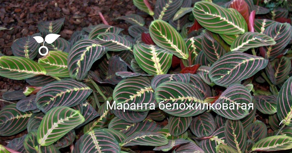 Алексеев Вячеслав / Стрелочники истории - 2 9