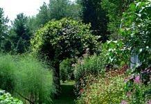 Растения для уголка отдыха