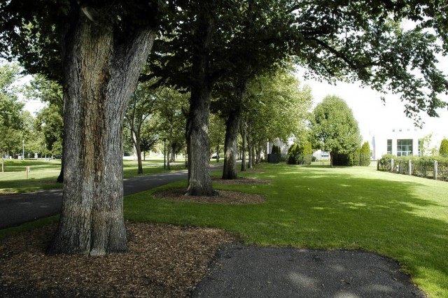 Деревья в городе