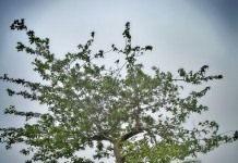 Причины возникновения болезней у деревьев и их распространение