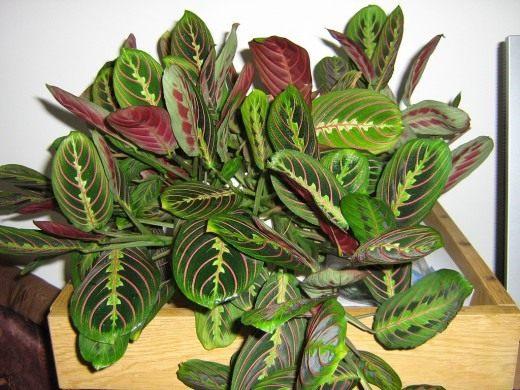 комнатные растения виды названия фото
