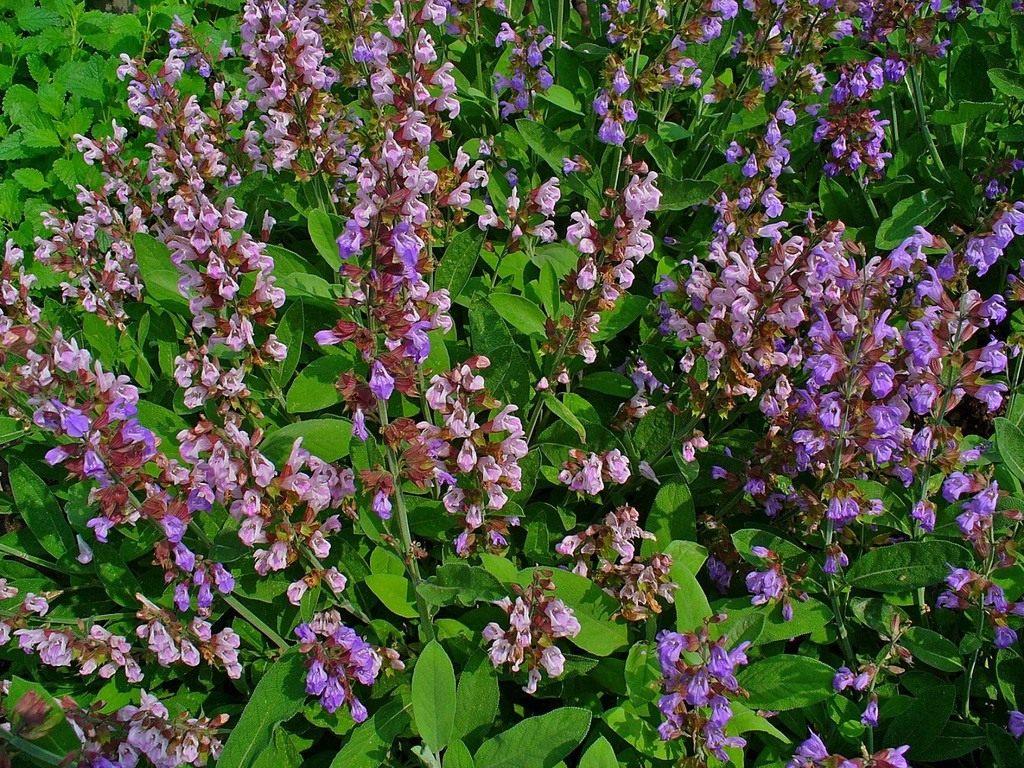 Самые редкие цветы в мире Интересные факты 86